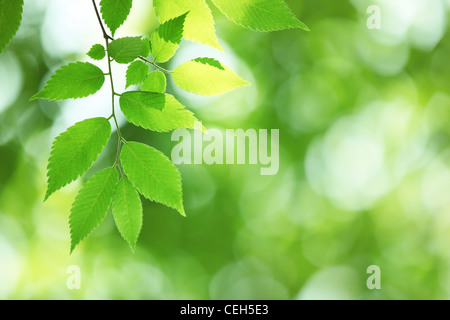 Closeup of fresh green leaves in forest - Stock Photo