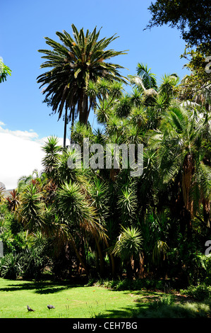 Company's Garden, Cape Town, Western Cape, South Africa - Stock Photo
