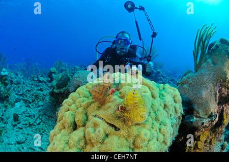 Caribbean coral reef with Christmas tree worms and scuba diver, Cienfuegos, Punta Gavilanes, Cuba, Caribbean - Stock Photo