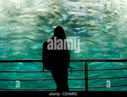 Woman in front of aquarium in Loro Parque in Puerto de La Cruz, Tenerife, Canary Islands, Spain - Stock Photo