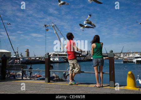 Tourists watching seagulls - Stock Photo