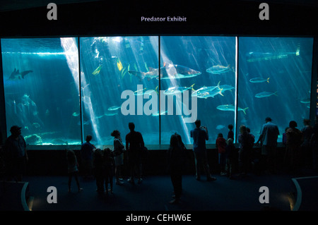 Two Oceans Aquarium,Victoria and Alfred Waterfront,Cape Town,Western Cape Province - Stock Photo