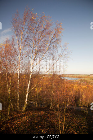 Autumn trees Pooley Hall country park, Polesworth, Warwickshire - Stock Photo