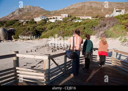 Tourists taking photos of penguins from boardwalk at Boulders Beach,Cape Town,Western Cape Province - Stock Photo