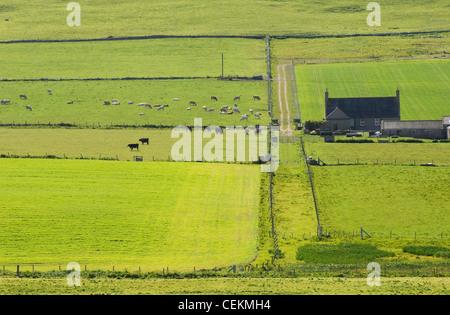 Farmland on the island of Westray in summer, Orkney Islands, Scotland. - Stock Photo