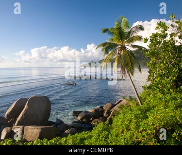Cap Lascars, Mahé, Seychelles. View across Anse Forbans, palm-tree in foreground. - Stock Photo