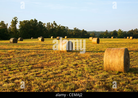 Large round grass hay bales in an Ozark Mountains hay meadow, ready to be moved to a storage area / Arkansas, USA. - Stock Photo