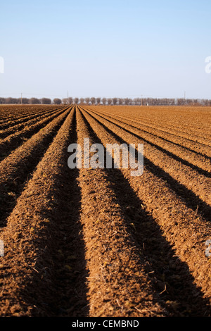 Agriculture - Bedded up field in Spring, prepared and ready for planting of cotton / Eastern Arkansas, USA. - Stock Photo