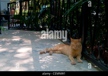 Hemingway cat in home and museum garden, Key West - Stock Photo