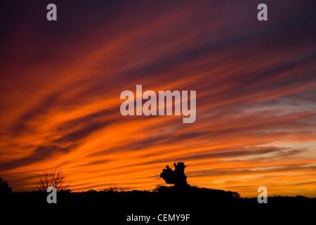 Sunset with a orange and red cirrus radiatus clouds over Norfolk, England in the winter. Silhouette of trees and - Stock Photo