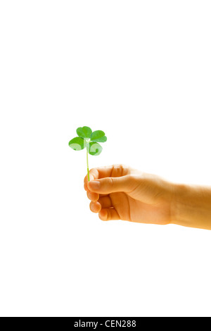 Hand holding four leaf clover - Stock Photo