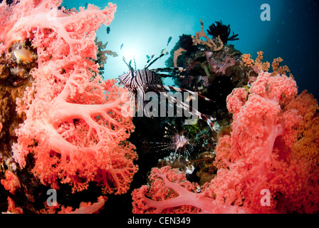 Red Lionfish and Corals - Stock Photo