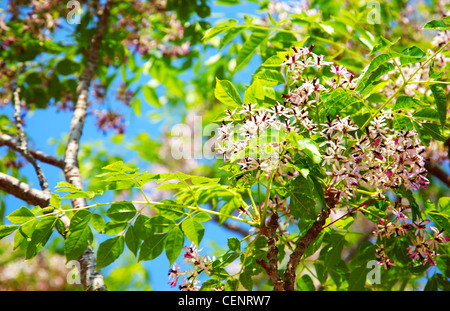 Fresh blooming flowers on the green tree, spring life in nature - Stock Photo