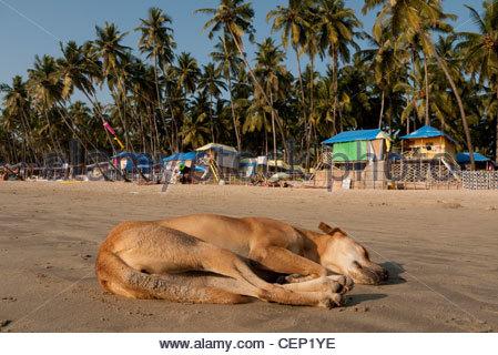 beach life in goa india stock photo 43510467 alamy