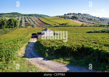 Small farmhouse in the middle of vineyards in Abruzzo, Italy - Stock Photo