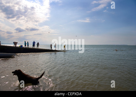 People and their pets enjoying the sea in the late afternoon at Whitstable. - Stock Photo