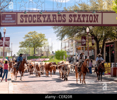 Stockyards station Cattle Drive, Fort worth - Stock Photo