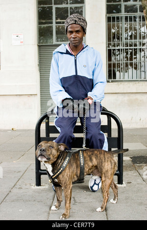 A man with his bull terrier. Staffordshire Bull Terriers are stocky, muscular dogs often referred to as 'keg on - Stock Photo