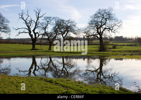 Bare trees and flooded fields near Kemsing in Kent. - Stock Photo