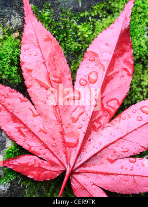 Autumn Leaf, Worcestershire, England, Europe - Stock Photo