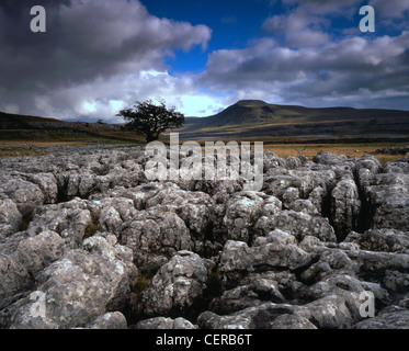 Ingleborough as seen from the limestone pavement on Twistleton Scar near Ingleton. It is one of the Yorkshire Dales' - Stock Photo