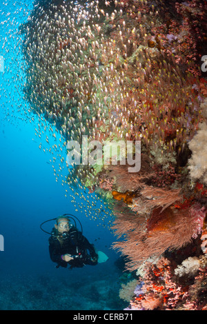 Scuba Diver and Sweepers, North Male Atoll, Indian Ocean, Maldives - Stock Photo