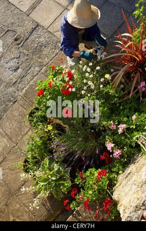 woman tending potted plants in garden, Dorset, England, UK - Stock Photo