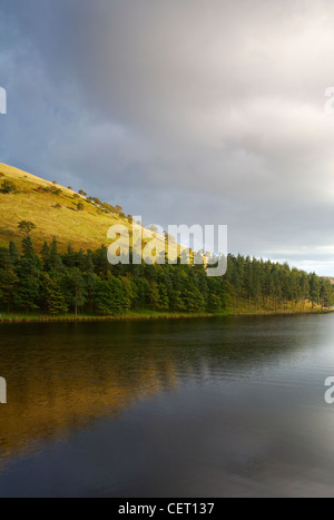 Pine trees line the banks of a reservoir in the Upper Derwent Valley. - Stock Photo