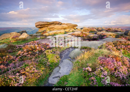 Dawn light on heather by a rocky outcrop on Stanage Edge, the longest gritstone edge in England, in the Peak District - Stock Photo