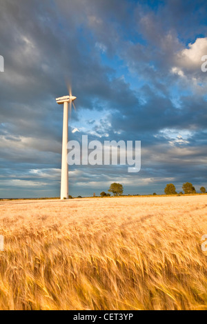 A wind turbine and a summer crop of Barley on Blood Hill at Winterton-on-Sea. - Stock Photo