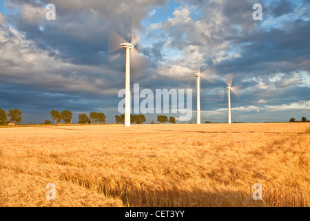 Wind turbines and a summer crop of Barley on Blood Hill at Winterton-on-Sea. - Stock Photo