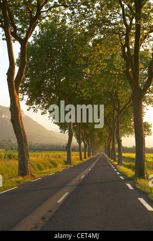 road lined with an avenue of trees in the Val du Fenouillet, Languedoc, France - Stock Photo