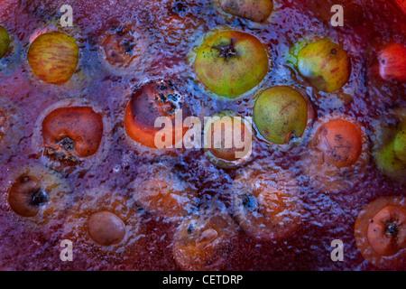 Apples in frozen pond - Stock Photo