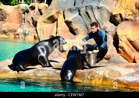 Sea Lion Enclosure, Loro Parque aquarium and Theme Park, Costa Adeje, Tenerife, Canary Islands, Spain - Stock Photo