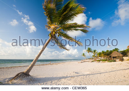 Palm tree on the beach at Tulum, Quintana Roo, Yucatan Peninsula, Mexico. - Stock Photo