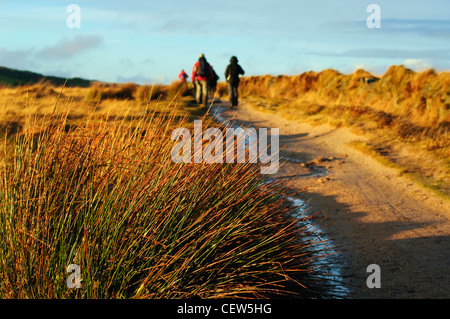 Rushes and walkers on track near South Hessary Tor, near Princetown, Dartmoor, Devon - Stock Photo