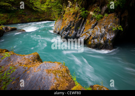 Quinault River in Olympic National Park, Washington state - Stock Photo
