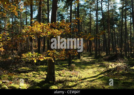 Woods in autumn hues - Stock Photo