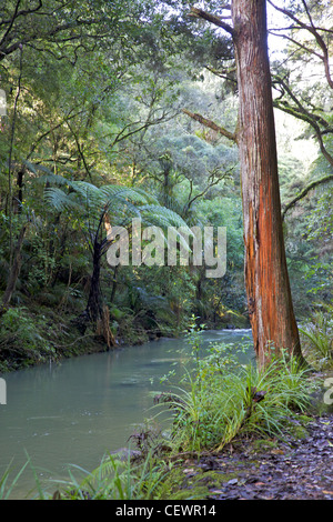 The Hatea River, just below the Whangarei Falls, North Island, New Zealand. - Stock Photo