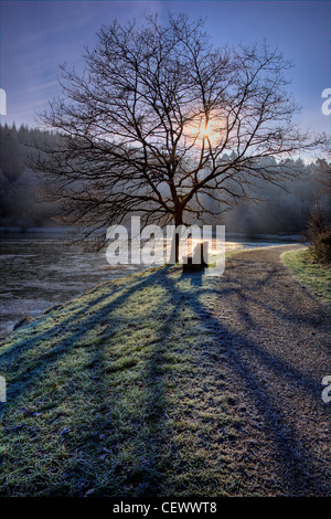 A tree silhouetted against the rising sun on a frosty morning at Mallard's Pike near Parkend in the Forest of Dean. - Stock Photo