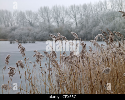 Frosty grass at Swillbrook Lakes, one of the most important nature conservation sites in the Cotswold Water Park. - Stock Photo
