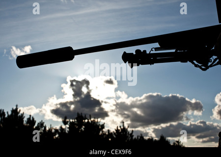 Backlit gun in Thetford forest, UK - Stock Photo