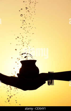 Indian male and female hands holding a plant seedling in a clay pot with water being poured over it. Silhouette. - Stock Photo