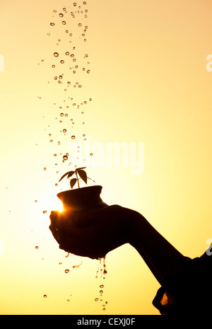 Indian teenage girl holding a plant seedling in a clay pot with water being poured over it. Silhouette. India - Stock Photo