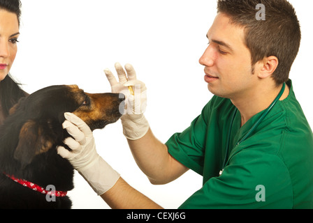 Vet giving pill to dog and owner woman looking at her dog isolated on white background - Stock Photo
