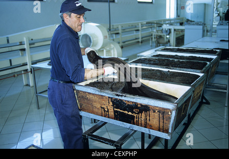 ITALY Calabria , Rossano , Amarelli factory produce liquorice confectionery from liquorice roots since 1871 - Stock Photo