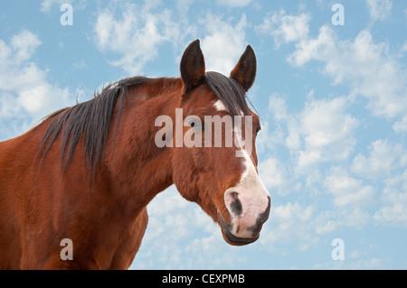 An old Arabian horse against cloudy skies - Stock Photo