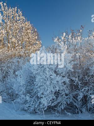 winterfoto, winter photo - Stock Photo