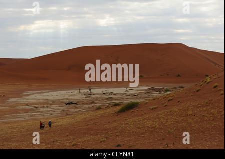 Deadvlei, the white clay pan near Sossusvlei in the  Namib Naukluft Park. Namibia. - Stock Photo