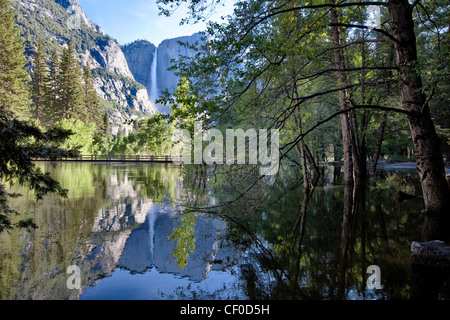 Yosemite Falls reflected in a flooded Merced River nearly flowing above Swinging Bridge - Yosemite National Park, - Stock Photo